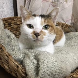 猫の里親募集中
