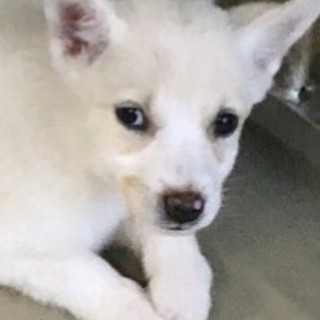 生後2か月 中型犬予想仔犬