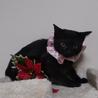 里親決定⚫黒猫の女の子●3ヶ月くらい