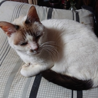 高齢者が飼育する猫6匹の新しい家族を探しています