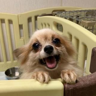 決定☆『エルフィ』笑顔が素敵な明るい子
