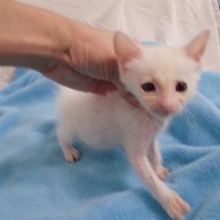 動画あり人懐こい白猫いおにあん君奇形あり