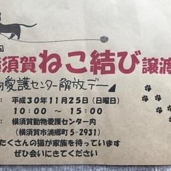 横須賀愛護センター☆開放ディ-