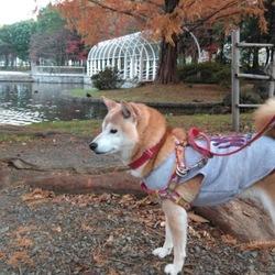 晩秋と…葵と…鴨と…(*˘︶˘*).。.:*♡