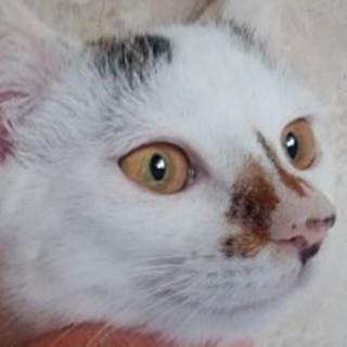 三毛猫 ♪ あきちゃん 3ヵ月