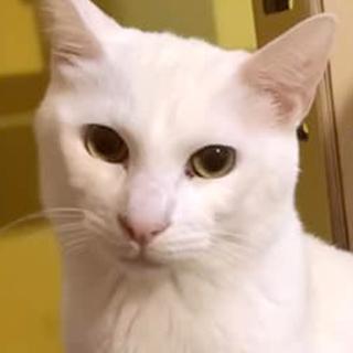 【先住OK】猫からモテモテ優男。白玉くん。