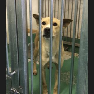 岩国市健康福祉センター収容  元気な成犬の男のコ