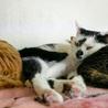 子猫の時からシェルターにいるみらい君 サムネイル2