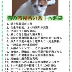 信頼度№1.日本で唯一、猫&里親様の為のお見合い会&人馴れ日本№1&厳しい要求無し サムネイル1