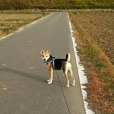 新しいハーネスとリードでお散歩~