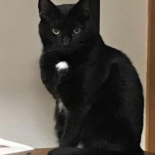 三本脚の美人な黒猫 すずちゃん 少しずつ甘えます