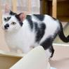 子猫の時からシェルターにいるみらい君 サムネイル3