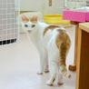 子猫の時からシェルターにいるチャオ君 サムネイル3