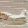 子猫の時からシェルターにいるチャオ君 サムネイル4