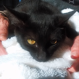 抱っこ好き♡甘えん坊な黒猫あき