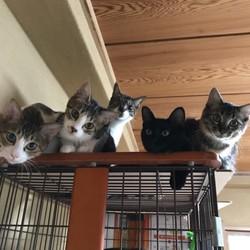 12月8日(土) 地域猫から社会猫へ FIPフリー 四谷猫廼舎 里親会(ボランティア募集中) サムネイル3