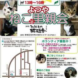 12月14日(金) 地域猫から社会猫へ FIPフリー 四谷猫廼舎ナイター里親会(ボランティア募集中)