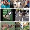 保護犬★保護猫★里親会&バザー★飯能お寺隣接地