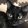 人間大好き!エキゾチックなお顔のサビ猫サ~ビちゃん