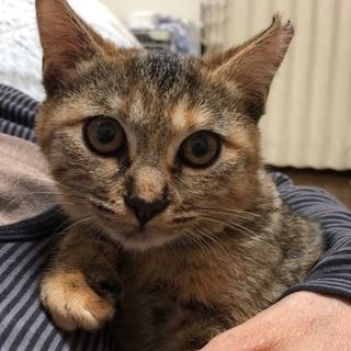 置き去りにされた子猫 (トライアル決定)