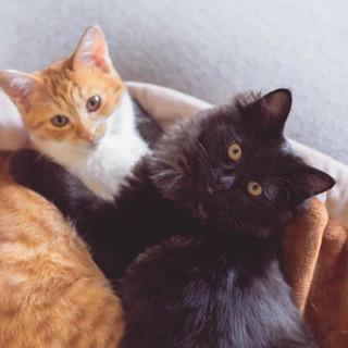 長毛黒猫と短毛茶シロの兄妹猫