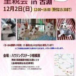 【おーあみ避難所】里親会開催!