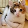 ちょっと強気な美猫のミケちゃん きぬちゃん