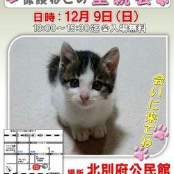 可愛い保護猫達のお見合い会(*^^)v