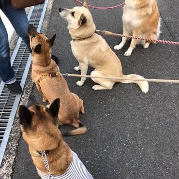 元野犬メンバーのお散歩風景