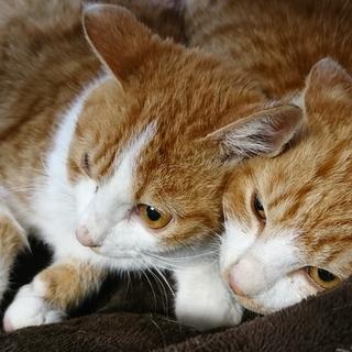 猫保護してます。AくんBくん