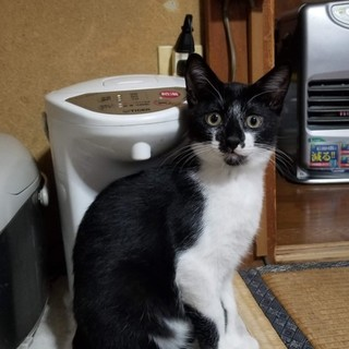 約生後5カ月仔猫の里親募集します。