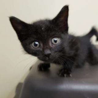 元気いっぱい!川崎生まれの黒猫はじめちゃん