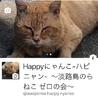 Happyにゃんこ-ハピニャン- ~淡路島のらねこ ゼロの会~