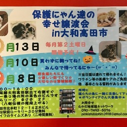 保護にゃん達の幸せ譲渡会in大和高田市 サムネイル1