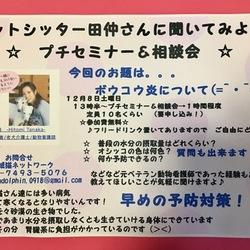 保護にゃん達の幸せ譲渡会in大和高田市 サムネイル3