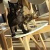 甘えん坊の黒猫さん