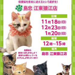 【江東猿江】ネコちゃん譲渡会 in 島忠江東猿江店 サムネイル1