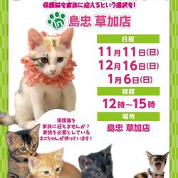 【草加】ネコちゃん譲渡会 in 島忠草加店