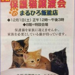 【飯能】保護猫譲渡会 in まるひろ飯能店