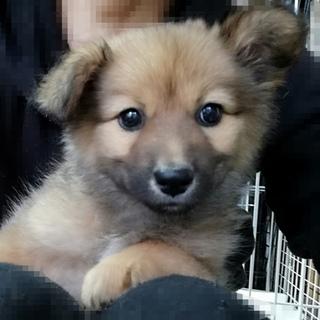 譲渡会12/9大阪市 一犬猫病院 参加 2ヶ月