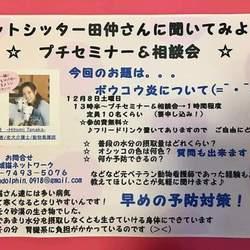 保護にゃん達の幸せ譲渡会in大和高田市 サムネイル2