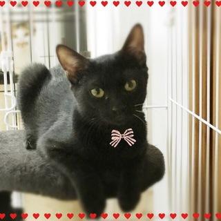 黒猫♪黒蜜ちゃん♪8ヶ月半