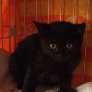 ムクムクぬいぐるみ・黒猫・女の子生後2ヶ月♪