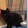 むくむく・あまあま黒猫男の子・生後約6ヶ月 サムネイル2