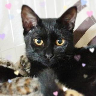 お転婆3姉妹の黒猫☆小梅ちゃん6ヶ月半くらい