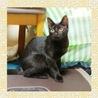 お転婆3姉妹の黒猫☆小梅ちゃん6ヶ月半くらい サムネイル2