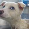 愛犬のお手入れセミナー&命のはなし徳島