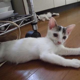 動画ありマヨネーズ体型の皿猫すたーしゃちゃん