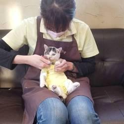 現役トリマーが教える ☆ 猫の爪切り講座 ☆