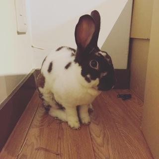 可愛いウサギの里親募集!福岡♡